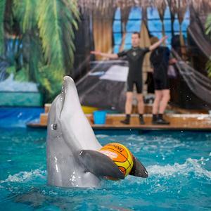 Дельфинарии, океанариумы Люберц