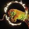 Цирки в Люберцах