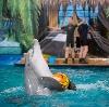 Дельфинарии, океанариумы в Люберцах