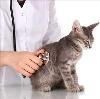 Ветеринарные клиники в Люберцах
